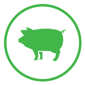 icon-pig-green